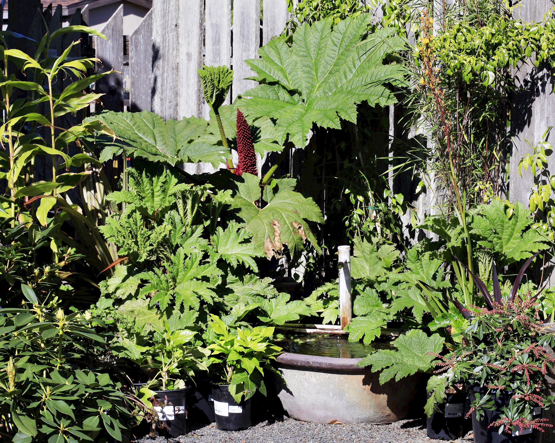 Nursery visit mcbg inc 2018 fort bragg california for Pond friendly plants