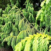 The Conifer Collection Collections Mcbg Inc 2018 Fort Bragg California