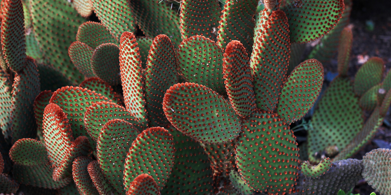 Succulent & Mediterranean Garden - Collections - MCBG Inc. 2018 ...