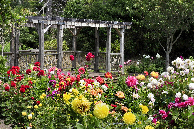 Dahlia Garden Display Collections Areas Mcbg Inc 2020