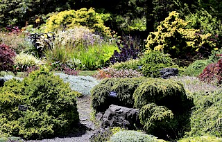 Dwarf conifers add texture to the Perennial Garden gallery image