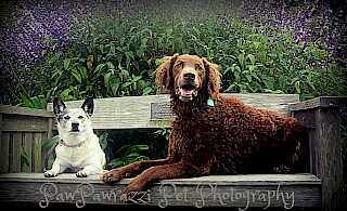 Sally & Booker – National Dog Day 2016 gallery image