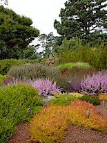 Heather Garden 3 gallery image