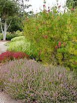 Heather Garden 4 gallery image