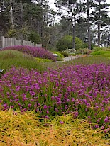 Heather Garden 5 gallery image