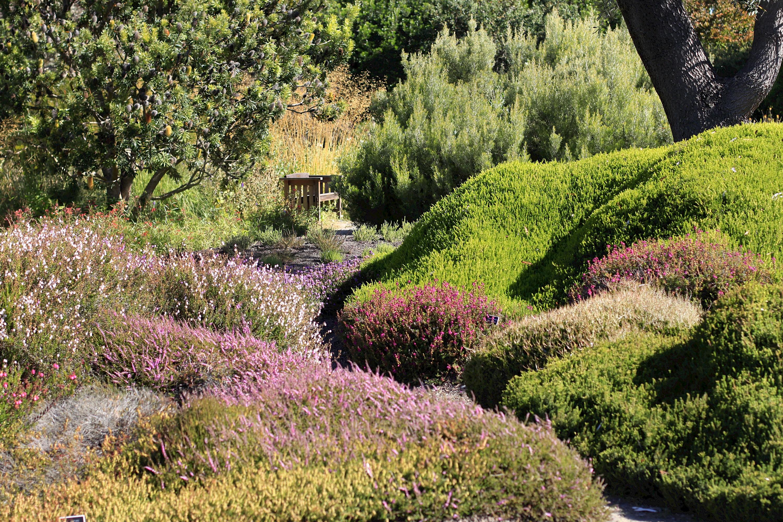 Heath and Heather Garden - Photo Galleries - MCBG Inc ...