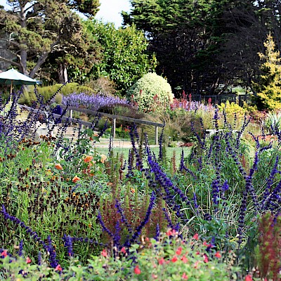 Perennial Garden - Photo Galleries - MCBG Inc. 2018 | Fort Bragg ...
