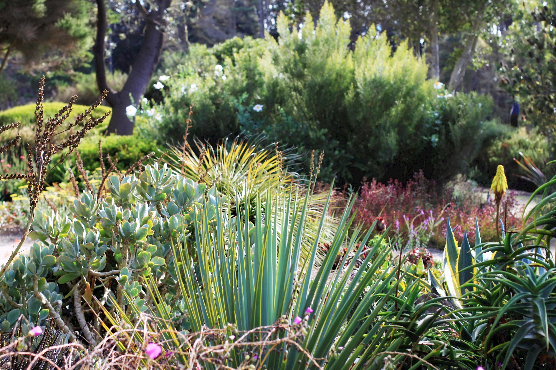 Succulent Garden Photo Galleries MCBG Inc 2017 Fort