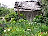 Vegetable Garden shed by Marilynn Boosinger gallery image