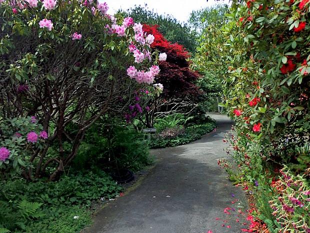 39th Annual John Druecker Memorial Rhododendron Show - Past Events ...