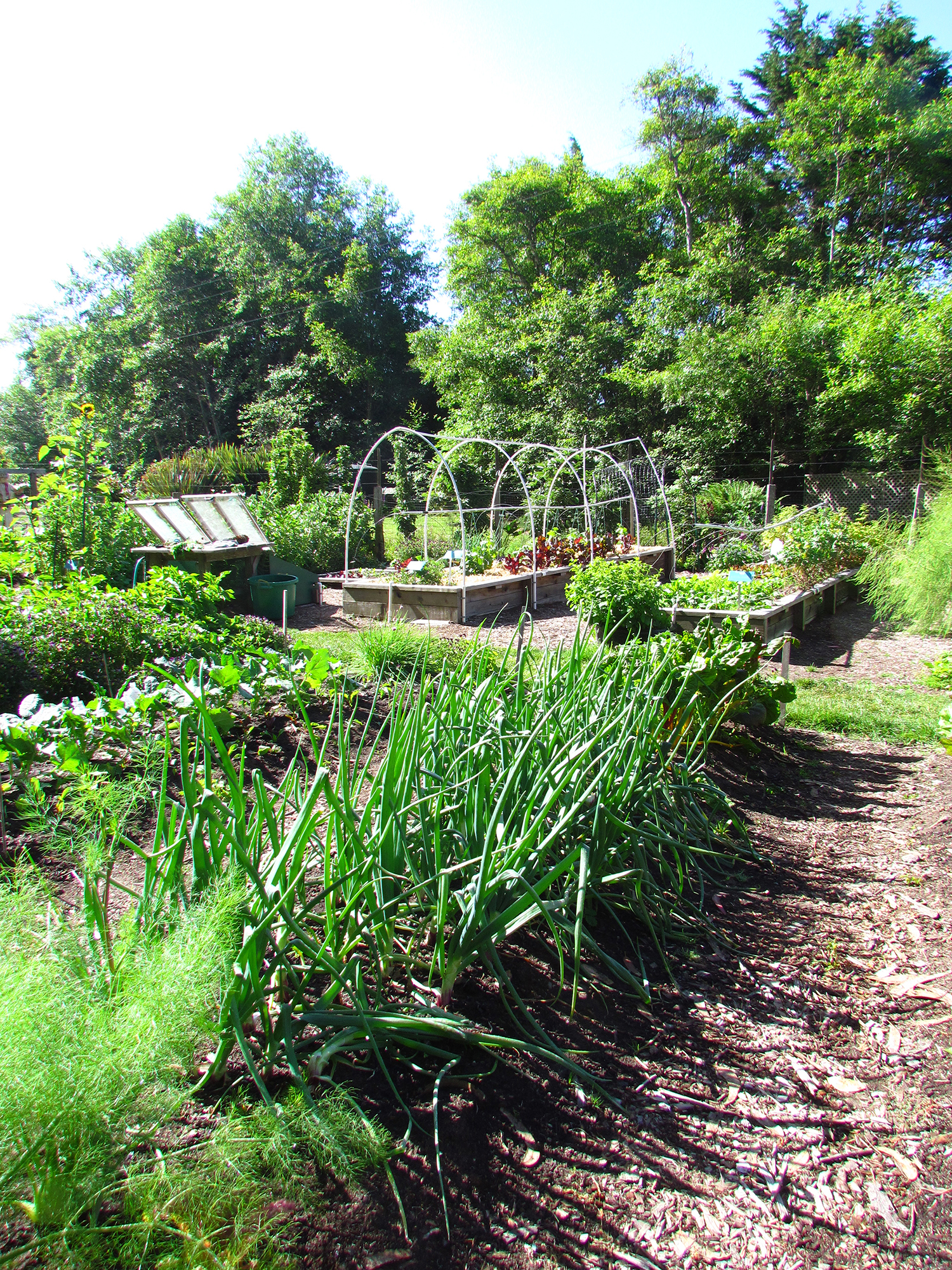 Sustainable Home Vegetable Gardening