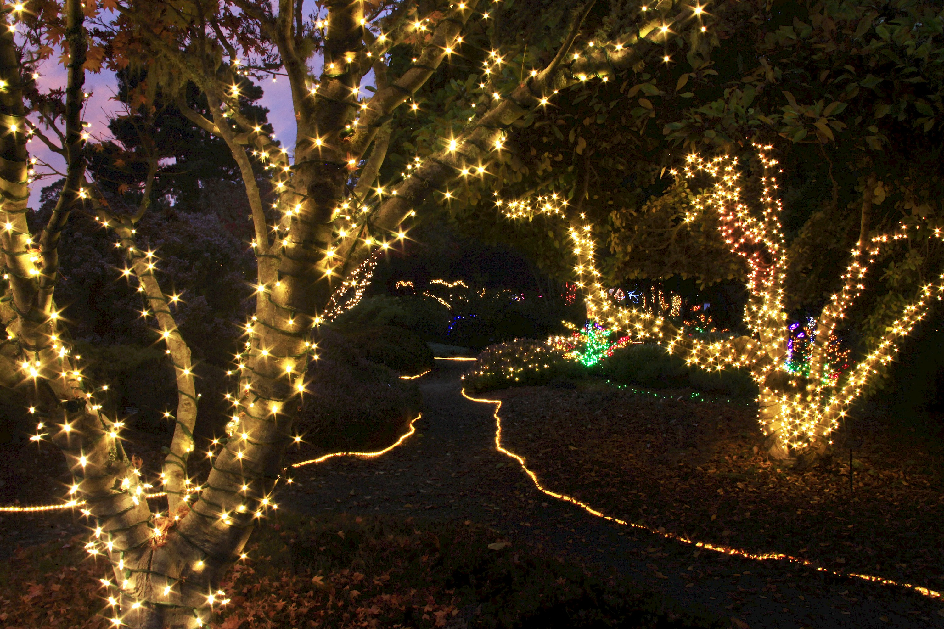 Festival of Lights ~ A spectacular show of glittering color - Photo ...
