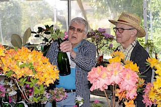 Judges Richard & Parker | Photo by Dick Jones, Noyo Chapter American Rhododendron Society gallery image