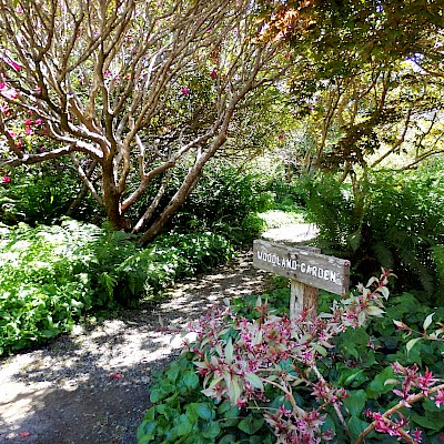 Woodland Garden - Photo Galleries - MCBG Inc. 2018 | Fort Bragg ...