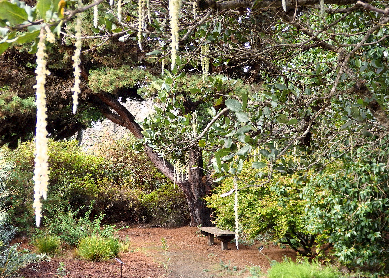 Mediterranean Garden Photo Galleries Mcbg Inc 2020 Fort