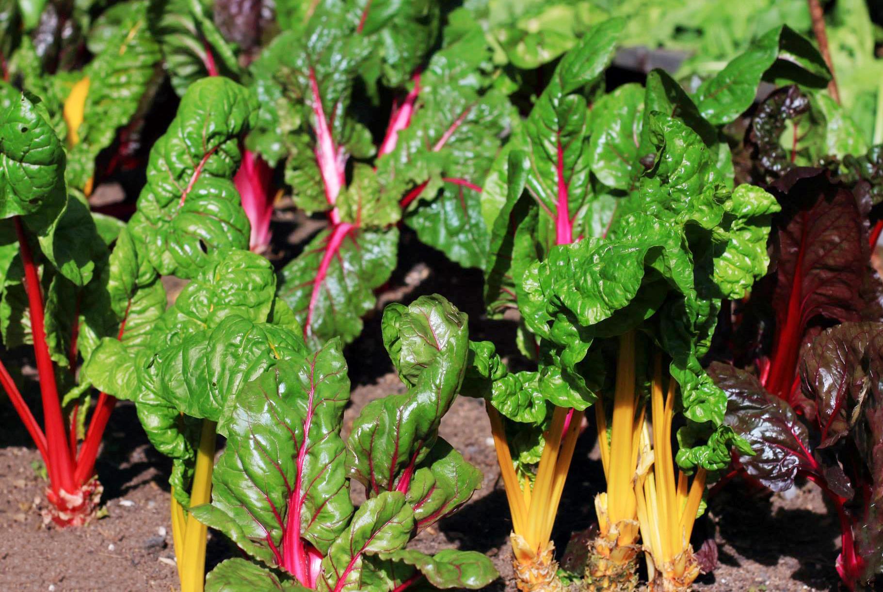 design vegetable decor ideas garden interior gardens and enchanting home backyard