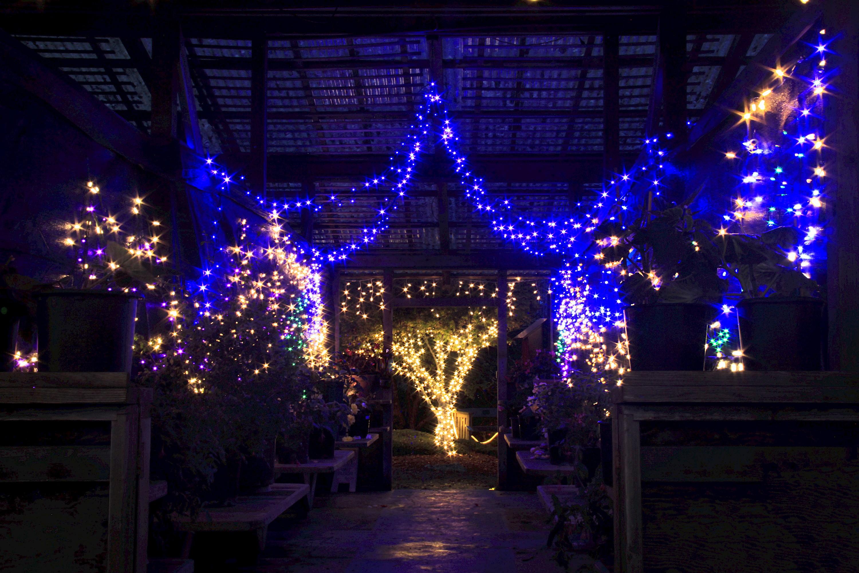 Glittering Lights ~ Sweet Treats ~ Live Music - Events - MCBG Inc ...