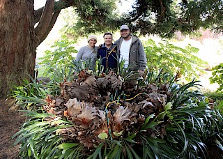 MCBG Gardeners Jaime and Pete with fern donor John Ziesenhenne (center) gallery image